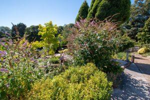 Top of Front Garden